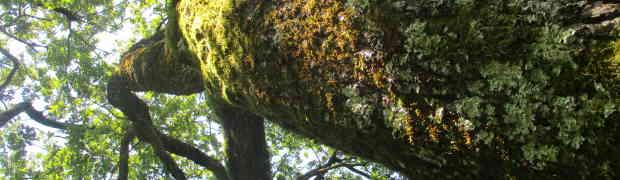 Contes des arbres au Sappey en Chartreuse